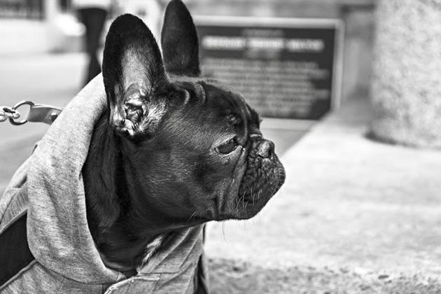 犬 イメージ